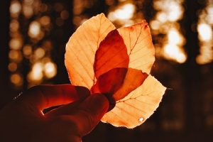 Pondering wonders of nature like leaves changing color is an act of inviting more awe into your life, which consequently makes us happier and healthier.
